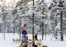 Experience a unique ride on a dog sled in Hokkaido!