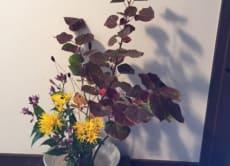 Enjoy Ikebana (Japanese flower arrangement) in Kyoto!