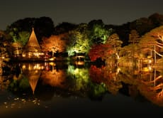 See the Autumn night light-up in a Japanese Garden in Tokyo