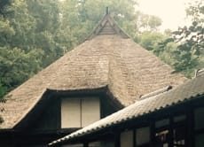 Explore the beautiful park Ikuta Ryokuchi near Tokyo