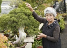 Join a Bonsai Experience Tour near Nagano