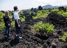 Experience a volcanic island, Izu Oshima, from Tokyo!
