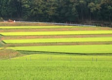Enjoy Japan's countryside and farmer's life near Kyoto