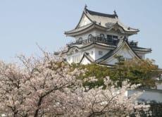 Enjoy Kishiwada Castle Walking & Danjiri Festival Tour,Osaka