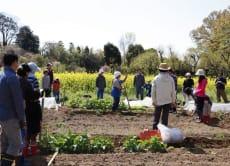 Enjoy Japanese Farm Experience in Saitama, near Tokyo!