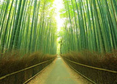 Dress like a ninja and explore beautiful Arashiyama, Kyoto!