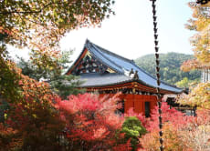 Explore Kyoto in a private charter bus tour (for groups)