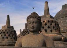 Yogyakarta Reptile Tour (2D/1N)