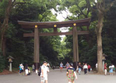 Explore Meiji Jingu Shrine and enjoy tasting Matcha!