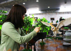 Play with Cute Owls at the Owl Park Cafe in Ikebukuro, Tokyo