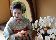 VIP Teahouse Banquet with Geisha in Kamishichiken, Kyoto