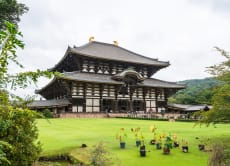 Half-day Morning Walking Tour of Nara from Kyoto by Train