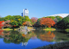 Enjoy Autumn Foliage Colors Tour in Tokyo