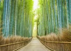 Rural Discoveries – 8 Day Deep Cultural Tour of Kansai Life