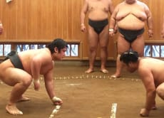 Watch Morning Sumo Training & Intermingle with Wrestlers!