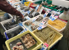 Weekend Urayasu Fish Market Morning Tour (Chiba)
