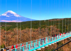 Mishima Skywalk and Hakone Area Private Guided Tour