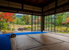 Murin-an Miniature Japanese Moss Gardening Experience, Kyoto