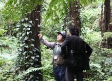 八丈島・シダの森でジャングルトレッキング体験