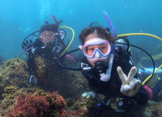 Introductory Diving & Diving with Sea Turtles, Hachijojima