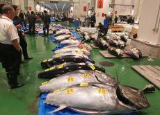 Private Tuna Auction and Toyosu Market Tour