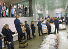 Private Tokyo Toyosu Tuna Auction Tour in English