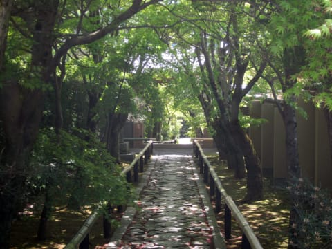 Join a Personalized Walking Tour in Kyoto, Nara