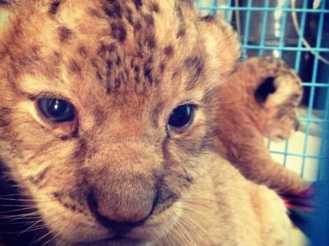 Volunteer as a zoo keeper