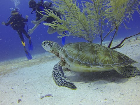 10% OFF Bali Scuba Diving at Best Sites of Nusa Lembongan
