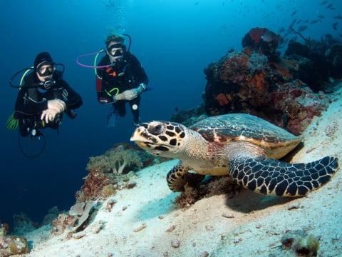 10% OFF Bali Scuba Diving at Best Sites of Nusa Lembongan