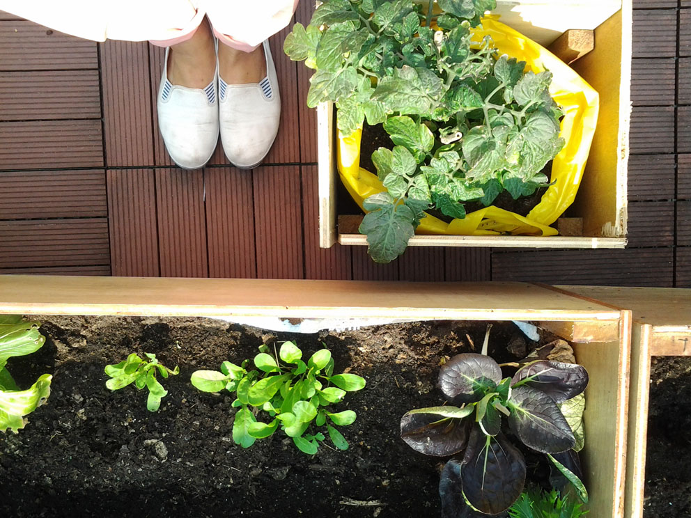 Harvest Vegetables On A Rooftop Farm & Make Healthy Snacks""