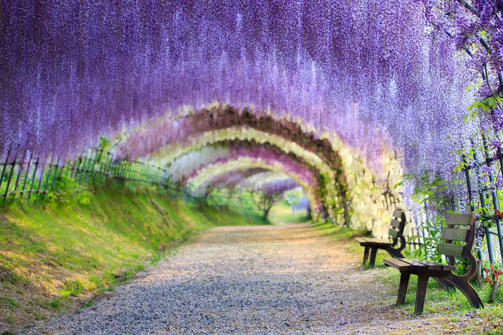 Image result for kawachi wisteria garden