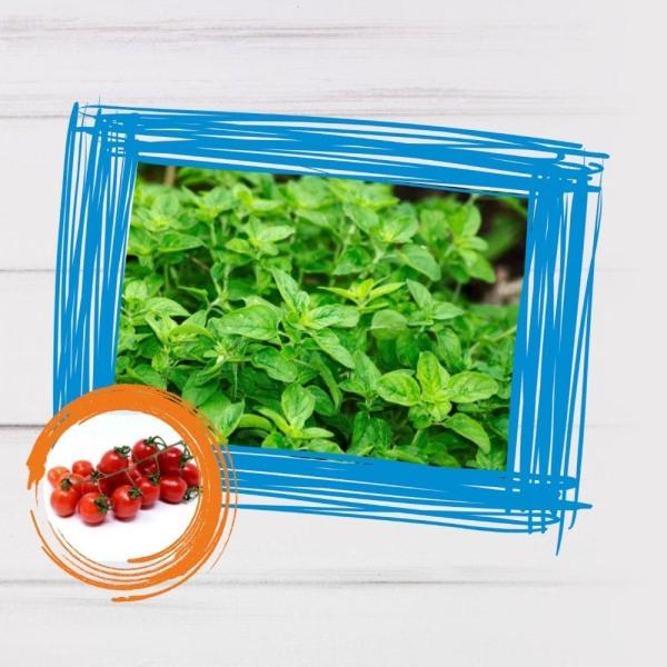 Image of Vegan Tomato Oregano Smoothie Recipe