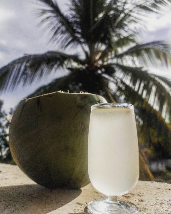 Image ofcoconut wine