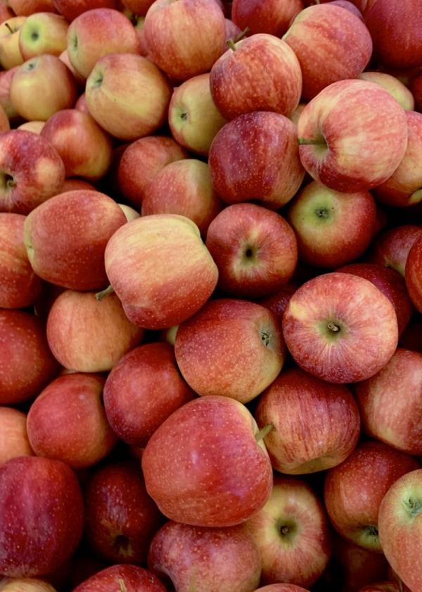 Image ofThe Very Best Apple Jack Moonshine Recipe