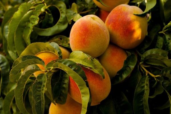 Image ofHazelnut Stuffed Peaches
