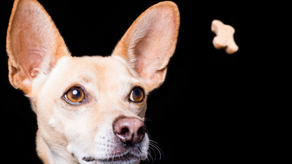 Image ofHemp-Infused Grain Free Dog Treats