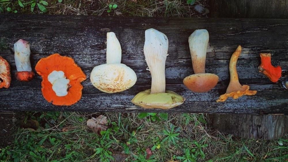 Image of Wild Mushroom Risotto