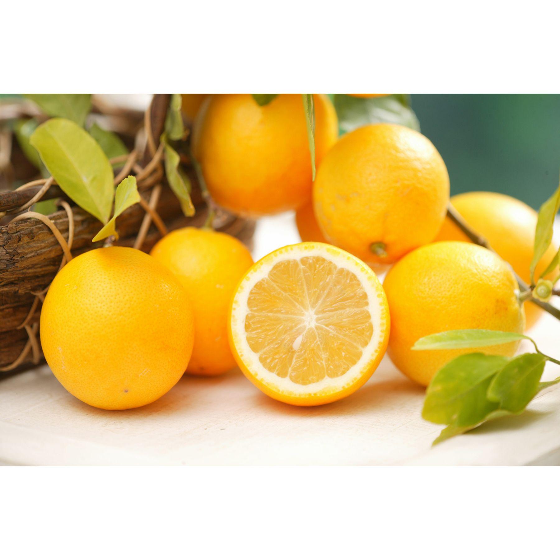 甘~いレモン!人気の果樹苗! レモン スイートレモネード 3号 苗2株 - 2