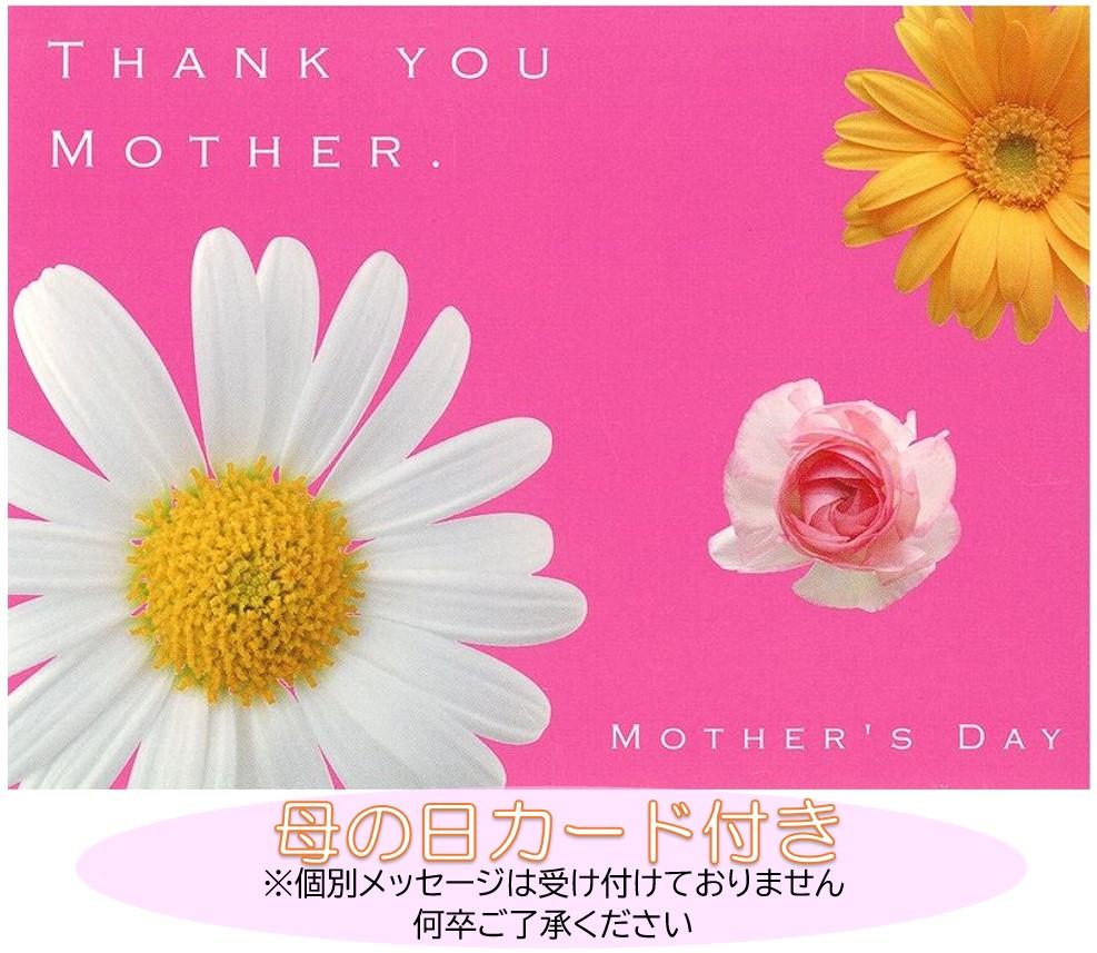 【遅れてごめんね】母の日 カラー キャピテイン ソロ 黄色系 5号鉢 - 4