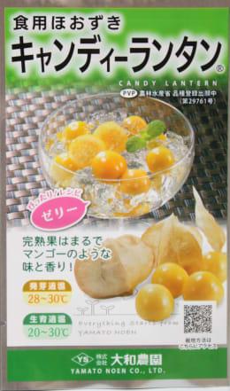 食用ほおずき キャンディ-ランタン 種子14粒入