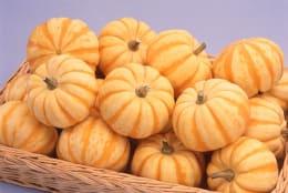 食用おもちゃかぼちゃ プッチーニ 種5粒