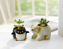 多肉ペンギン・白くま 2種2鉢セット