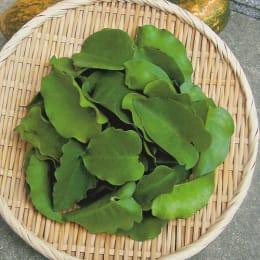 育てるオカワカメ 野菜苗 苗 2株