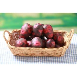 栗のような甘みとコク。病気に強く育てやすい。 種ジャガイモ デストロイヤー(グランドペチカ)約1kg