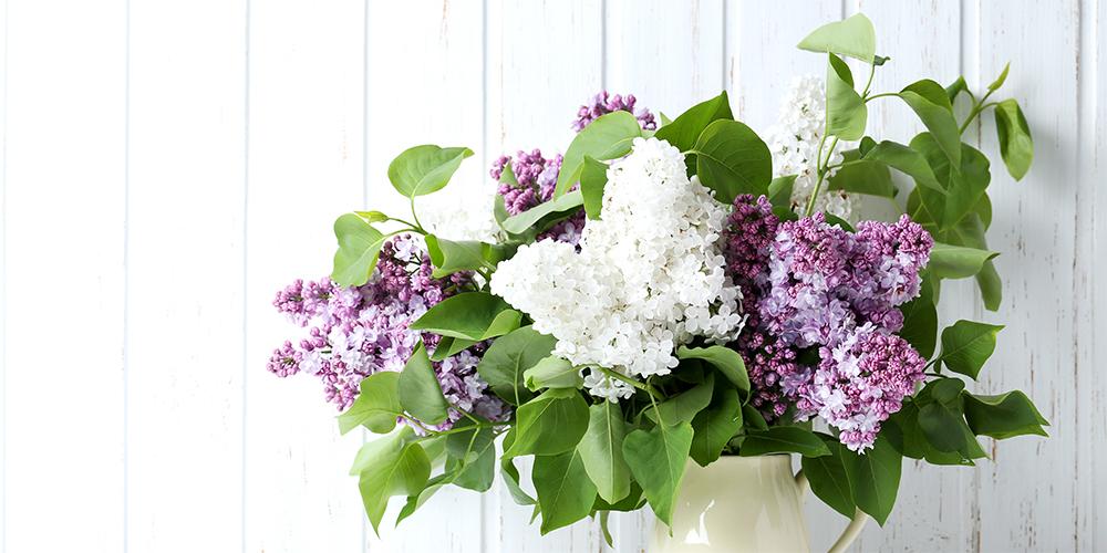 花・植物の専門通販はなみどり