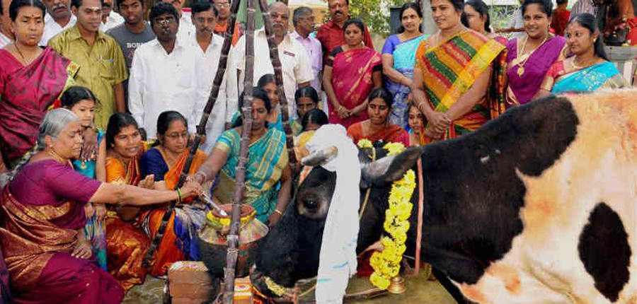 Pongal Festival Tamil Nadu