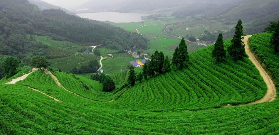 Darjeeling, India - Places To See In Darjeeling