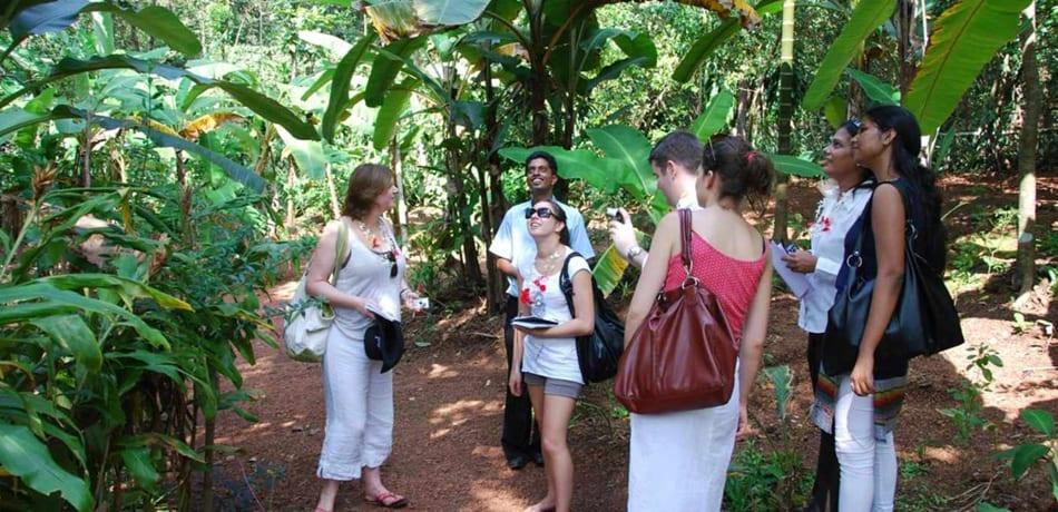 Visit a spice plantation