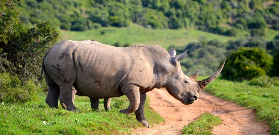 Wildlife At Manas National Park